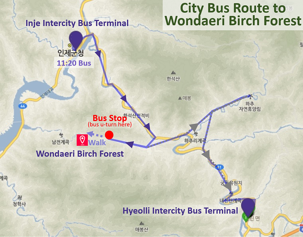 Wondaeri Birch Forest - City Bus Route & Bus Stop Location