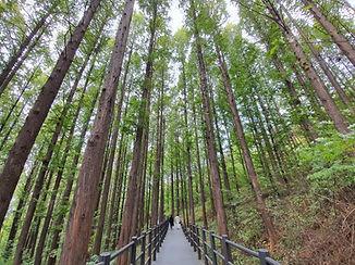 Top Hidden Places in Seoul - Mountain Ansan Jarak-gil Trail | KoreaToDo