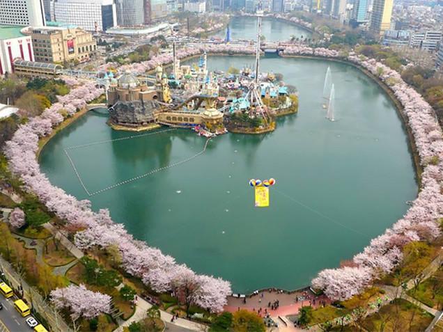 Seochon Lake Cherry Blossom Festival
