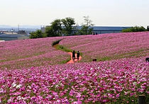 Recommended Day Tours from Seoul - Anseong Farm Land   KoreaToDo