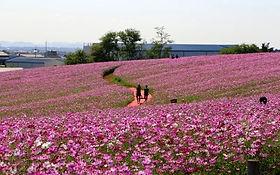 Anseong Farmland