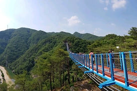 Nami Island, Suspension Bridge (& Petite France / Morning Calm) Day Tour