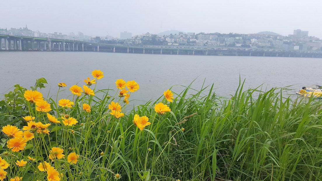 Jamwon Hangang Park & getting there | Seoul, South Korea