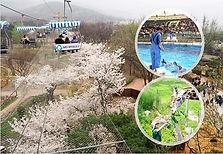 Seoul Zoo (incl. Sky Lift & Elephant Train) Combo Ticket