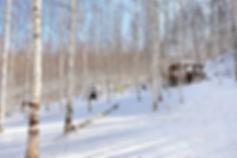 Wondaeri Birch Forest - Winter & Getting There   KoreaToDo
