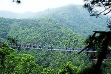Nami Island, Suspension Bridge (& Petite France / Morning Calm) Day Tour