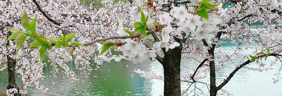 Seokchon Lake Cherry Blossom Festival -