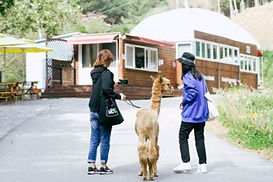 Alpaca World, Chuncheon Makguksu Museum & Slope Slip Day Tour