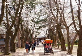 Nami Island & Petite France Day Tour