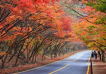 Recommended Day Tours from Seoul - Naejangsan National Park Autumn Foliage Day Trip   KoreaToDo