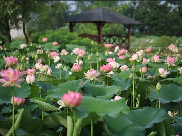 Semiwon Garden