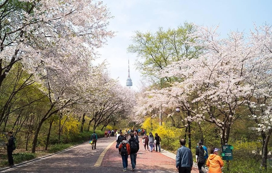 Top Places for Cherry Blossoms & Spring Flowers in Seoul - N Seoul Tower | KoreaToDo