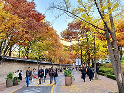 TOP Autumn Foliage Places in/outside Seoul - Deoksugung Stone-wall Road | KoreaToDo