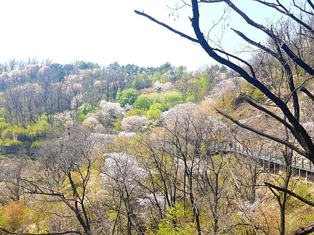Mountain Ansan Jarak-gil Trail