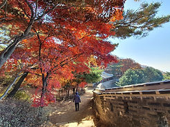TOP Autumn Foliage Places in/outside Seoul - Namhansanseong Park & Fortress | KoreaToDo
