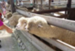How to get to Daegwallyeong Sheep Farm | Pyeongchang, South Korea
