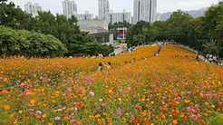 TOP Autumn Foliage Places in/outside Seoul - Olympic Park | KoreaToDo