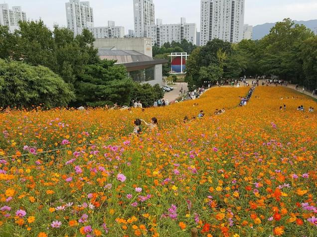Olympic Park - Wild Flowers Field