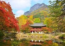 Recommended Day Tours from Seoul - Jeonju Hanok Village & Baegyangsa Day Tour   KoreaToDo