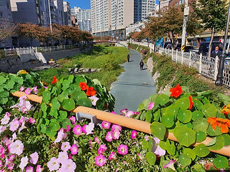 Seongbukcheon Stream