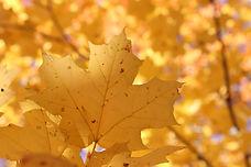 Korea's Autumn Season - When & Where to Go | KoreaToDo