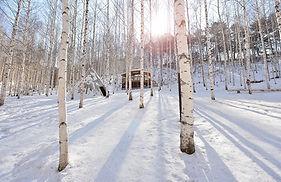 Birch Tree Forest, Chuncheon Myeongdong & Sky Walk Day Tour