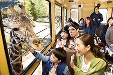 Shuttle Bus Transfers between Seoul & Everland