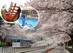 Seoul Zoo (incl. Sky Lift & Elephant Train) Combo Ticket