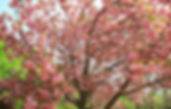 Busan & Gyeongju King Cherry Blossom Day Tour
