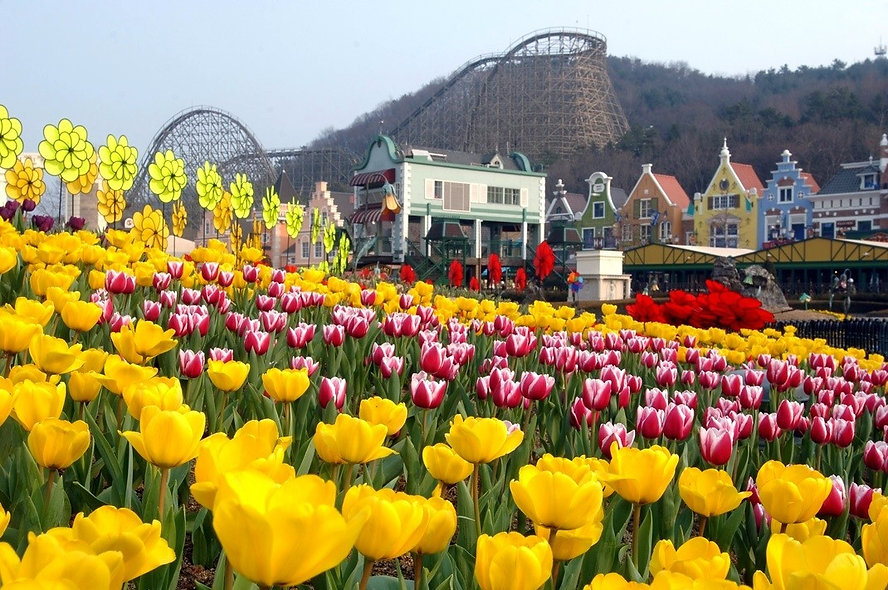 Everland - Tulip Festival & Getting There | Day Trip from Seoul, South Korea