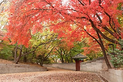 TOP Autumn Foliage Places in/outside Seoul - Changdeokgung Palace & Secret Garden | KoreaToDo