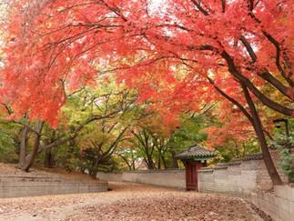 Changdeokgung Palace & Secret Garden