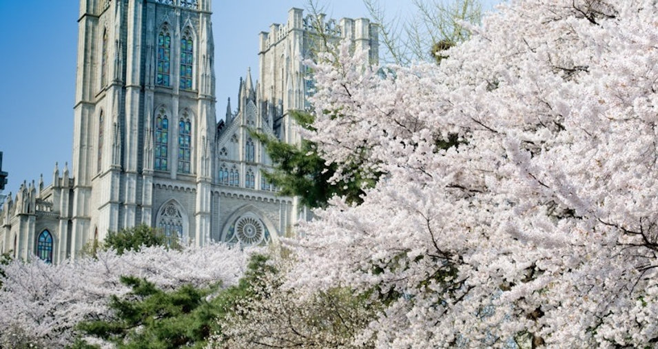 Top Places for Cherry Blossoms & Spring Flowers in Seoul - Kyung Hee University | KoreaToDo