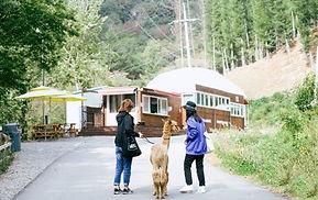 Alpaca World, Chuncheon Makguksu Museum & Slope Slip Day Tour