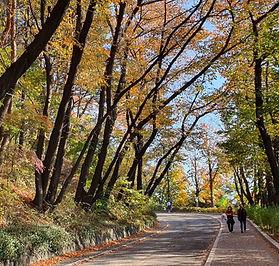 Namsan Mountain & N Seoul Tower