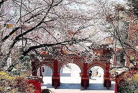Incheon Day Trip (Rail bike, Chinatown, Wolmido Island, etc)