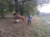 Führungskräfte Training Pferde