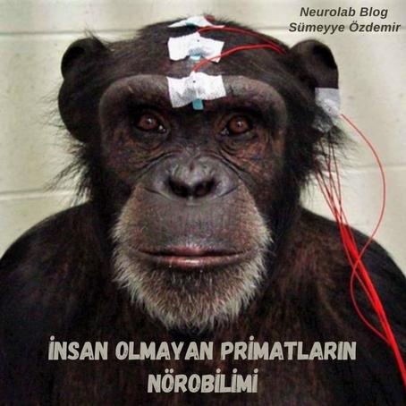 İnsan Olmayan Primatların Nörobilimi