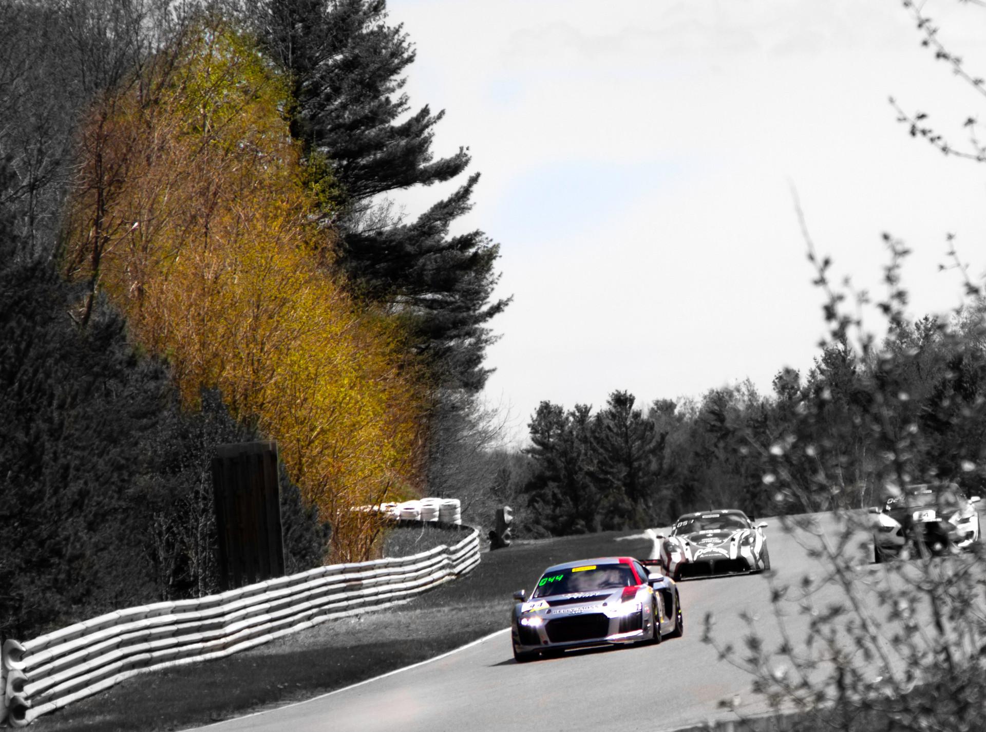 colouredR8&tree.jpg