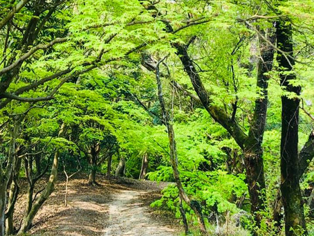 緑が美しい時期になりました🌱
