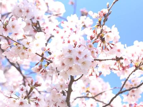 オンライン写真展『桜 -  Fully Bloomed-』