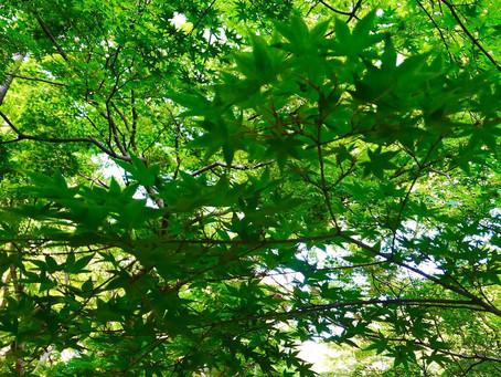 6月1日より森をツナグの整体を再開いたします!