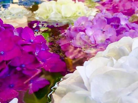 紫陽花の季節に、粋な計らい!そして嬉しい整体のお声🌸