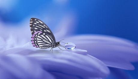 butterfly-3054736_960_720.jpg