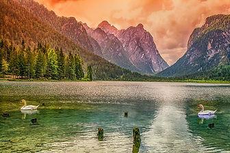 Photo cygne et montagne-Pixabay-3442722_