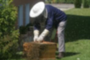 beekeeper-215185__340.webp