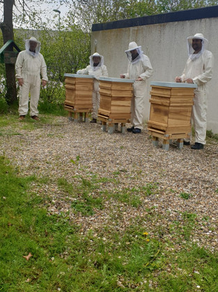 Bald kann Honig geerntet werden