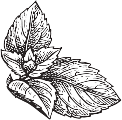 Peppermint leaf transparent.png