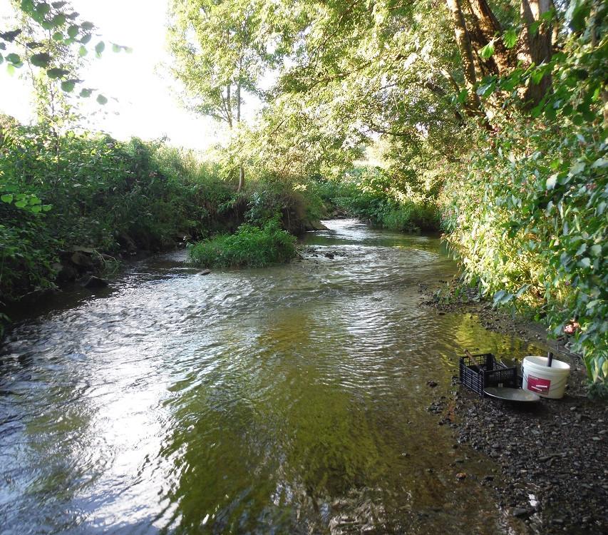 Rýžování zlata na řece Oskavě