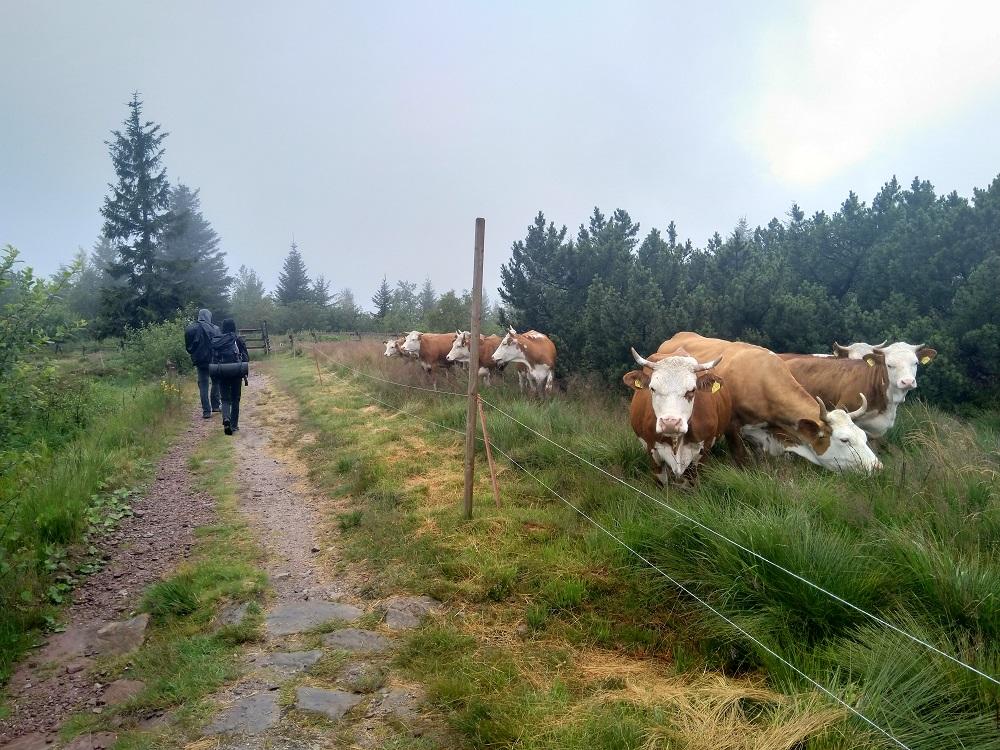 Pastevecké oblasti